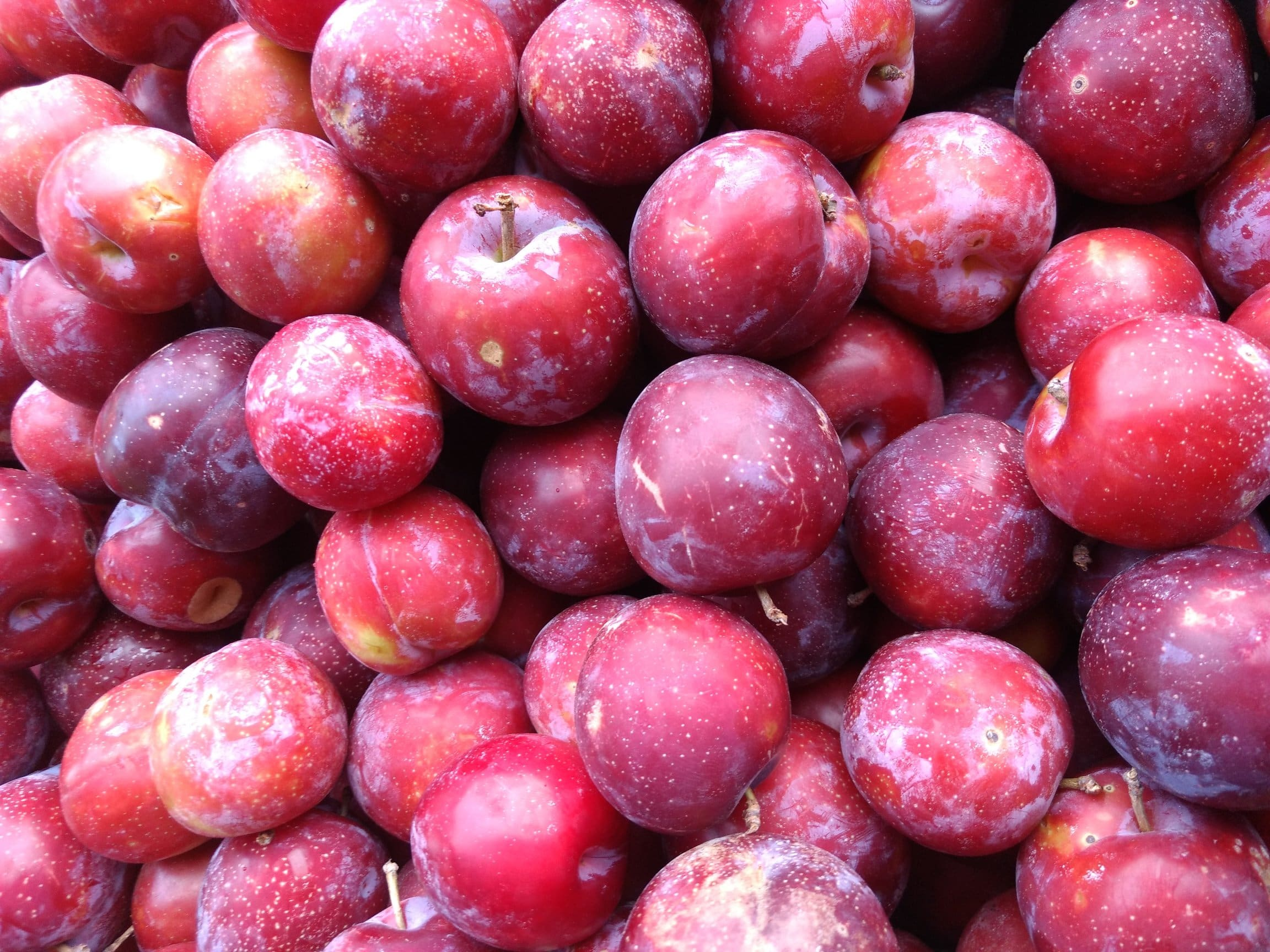 In season, October, Suesey Street, plums, in season in october