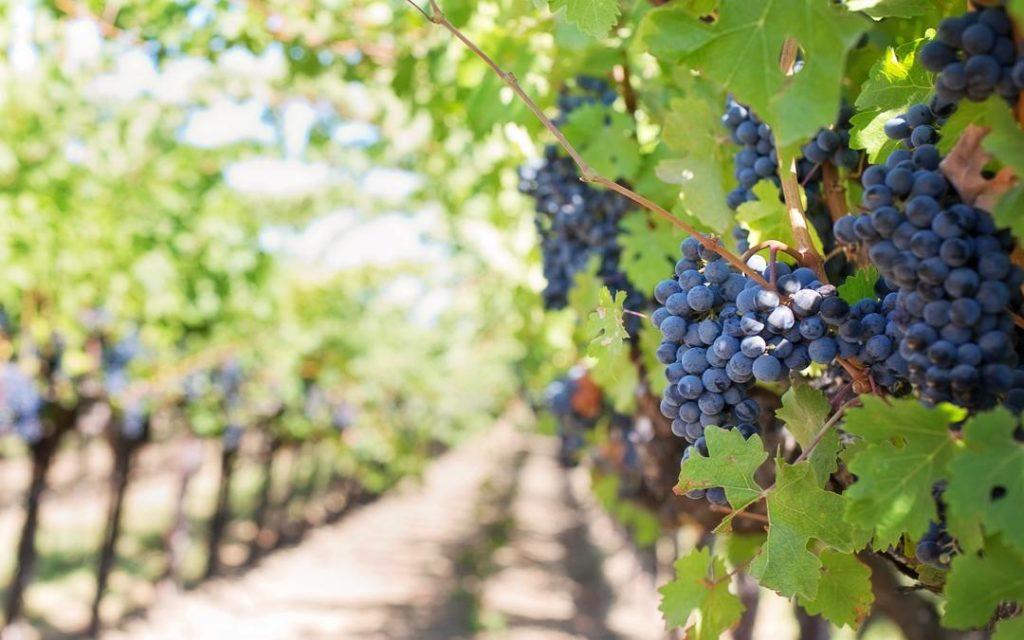 biodynamic wines, alcohol free wine, alcohol free, zero alcohol wine